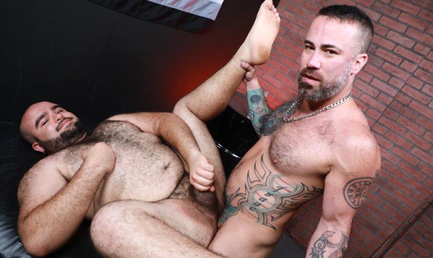 BearBack – The Bear Den – Ago Viera, The Rhino